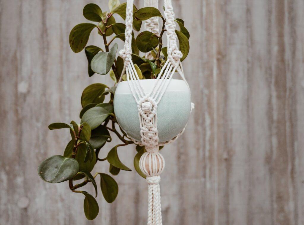 stylish hanging plant