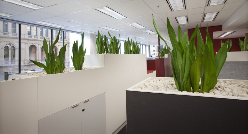 using plants as decor in office spaces