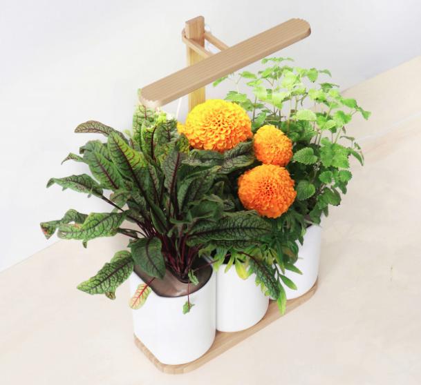 small kitchen herb garden