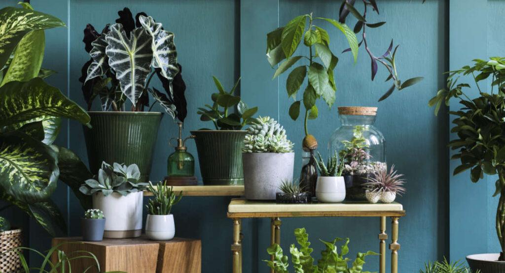 home micro jungle - plants in interior design